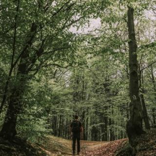 W poniedziałek polecamy:⏬ 🔸niebieski szlak na Leskowiec z Ponikwi.  ▶️ Szlak niebieski w zasadzie zaczyna swój bieg w Wadowicach, natomiast odcinek między Wadowicami, a Ponikwią nie wygląda na mapie zbyt zachęcająco - duża część to droga asfaltowa.  ▶️ Za to ten fragment od wspomnianej Ponikwii jest przyjemny, poprowadzony w całości przez las i zahacza przy okazji o Groń Jana Pawła II. Z Gronia jak i z Leskowca rozpościerają się ciekawe widoki. Dużą zaletą jest fakt, że z tego pierwszego roztacza się krajobraz na północ, natomiast z drugiego szczytu na południową stronę, więc jest dość różnorodnie. ••• Leskowiec to taki nasz szczyt, na którym mamy wrażenie byliśmy już 1566974 razy, a za każdym razem jest inaczej i dzięki Bogu, bo chyba znienawidziłabym tę górę. Krystian jak zwykle podchodzi do tematu mniej emocjonalnie 😁 Są na mapie szczyty, które odwiedzacie tak często? Dajcie znać, które to! 😉 . . . #beskidy #beskidmały #beskidmałyjestwspaniały #naszlaku #wgorachjestwszystkocokocham #polskiegóry #wlesie #lasypanstwowe #kobiecafotoszkoła #dziewczynykfs #wiosna2021 #polskiekrajobrazy #polskatravel #polskanaweekend #goryponadwszystko #małopolska #turysta #beskidomaniacy #tripsofpoland #przyrodapolska #kochamgóry