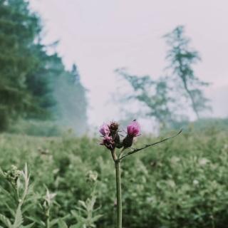 Tygodniowe szwędanie się po Beskidzie dało nam jednocześnie dużo nowej energii i jednocześnie sprawiło, że życie doczesne jest jakby za mgłą.  Dokładnie tak jak na zdjęciu.  Osobiście, siebie widzę wyraźnie, ale to, co mnie otacza jest jakby czymś tak ulotnym, że po lekkim podmuchu wiatru zaraz się rozpłynie.  •••  Nie ukrywam, wpadłam w melancholijny nastrój, a lista priorytetów bardzo się zmieniła. Mam tu na myśli m.in. RAZEM W GÓRACH, które było dość wysoko w rankingu codziennych zadań, ale od dwóch tygodni jestem tu rzadko i jest mi z tym szalenie dobrze (wiem, nikt nie jest zaskoczony 😆).  Czy zbieram siły na powrót? Raczej nie - chyba dojrzałam do tego, żeby rezygnować z prowadzenia profilu na rzecz spędzania czasu z bliskimi i korzystania z wolnego czasu tak jak kiedyś lubiłam... A nie z telefonem w ręku.  O ironio, piszę to w dniu, który ochrzczony jest dniem bez telefonu 🙈  ••• Dajcie znać co u was słychać, jak się czujecie? Korzystacie z lata? Jeśli tak to w jaki sposób? Może ktoś z was doszedł do podobnych wniosków? 🙂 . . . #beskidniski #beskidniskisercubliski #razemwgorach #beskidy #wwo #melancholia #wgorachjestwszystkocokocham #naszlaku #weroampoland #pocztowkazpolski #polskiegóry #lato #wakacje2021 #polskiekrajobrazy #polskaprzyroda #przyrodapolska #kwiaty #polska_blog #wrp_ontour #góry